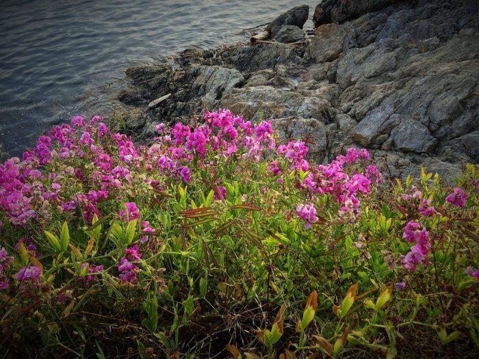flowersbysea