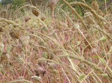 dried grass in September