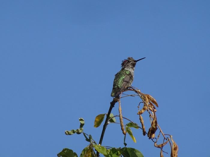 annashummingbird4
