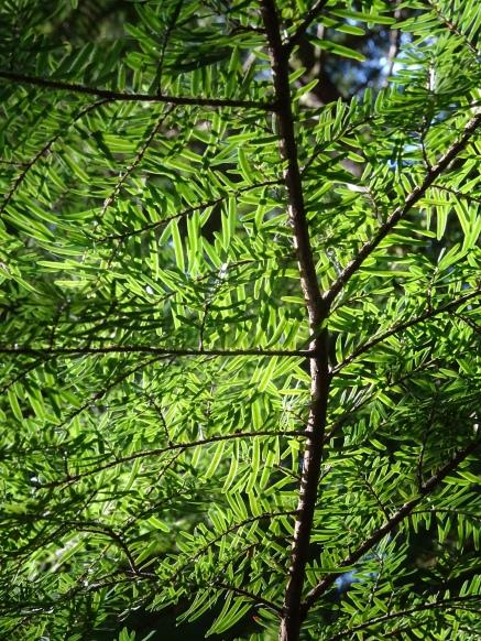 treeplantgreen