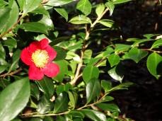 flowerspringredmacro
