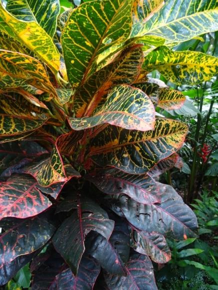 botanicgarden (5)